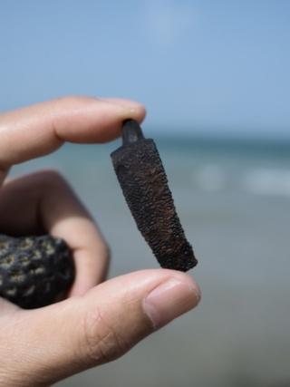 サメの歯化石とスッポンの骨