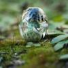 「雨あがりの森」Glass2H